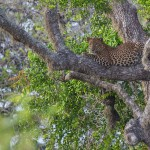 Leopard at Yala, Things to do at Tissamaharama