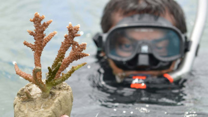 """Plant a Coral "" Coral reef restoration project"